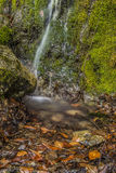 Waterfal. Natural tunnel of love formed by trees in Romania Royalty Free Stock Photos