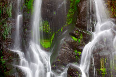 Waterfall. At Azores (Achada/Sao Miguel Island Royalty Free Stock Images