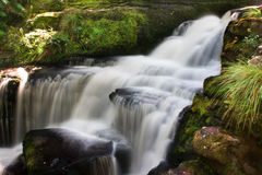 Waterfall. Small waterfall in the heart of unspoiled new zealand's forest royalty free stock photo