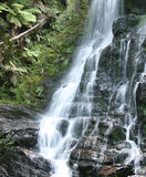 Waterfall. Forest Waterfall in Tasmania Australia stock photography