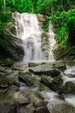 Waterfall. In jungle with lush green trees around Stock Images