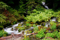 Waterfall. Secluded waterfall in Oregon Mountains Stock Photo