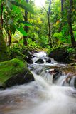 Waterfall. Beautiful waterfall in the middle of the woods Royalty Free Stock Images