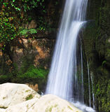 Waterfall. And green leaves in the forest Royalty Free Stock Images