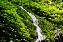 Waterfall. With stone in the forest Royalty Free Stock Photos