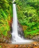 Waterfall. Beautiful waterfall in rainforest. Bali Royalty Free Stock Photography