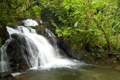 Waterfall. Rainforest waterfall, International Park La Amistad, Cerro Punta-Guadalupe, Chiriqui province / Panama /  Central America Royalty Free Stock Image