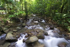 Waterfall. Photo of natural green waterfall stock photo