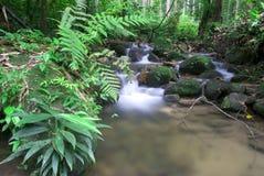 Waterfall. A photo of natural green waterfall royalty free stock photos