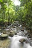 Waterfall. Natural green waterfall beautiful photo stock photos