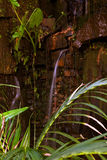 Waterfall. In the forest with water plants Royalty Free Stock Photo