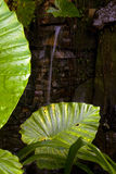 Waterfall. In the forest with water plants Royalty Free Stock Images