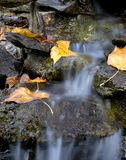 Waterfall. Autumn leaves on the side of a small cascade stock photos