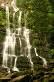 Waterfall. Little waterfall in the Tasmanian rainforest stock photography