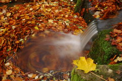 Waterfall. Small waterfall with a leaf Stock Photos