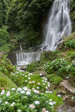Waterfall in Achada Nordeste on Sao Miguel, Azores Stock Photography