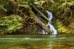 Waterfall along the Salmon River. Seasonal waterfall sheets down the moss covered rocky banks along the Salmon River in Mt. Hood National Forest stock photos