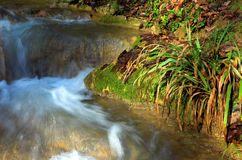 Waterfall And Green Grass, Sochi, Russia Royalty Free Stock Image