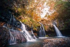Waterfall with autumn foliage in Fujinomiya, Japan royalty free stock image