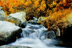 Waterfall in autumn forest. Beautiful waterfall in autumn forest Royalty Free Stock Image