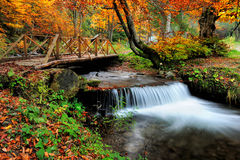 Waterfall in the autumn forest Royalty Free Stock Images
