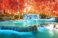 Waterfall in autumn forest, names. ` Tat Kuang Si Waterfalls ` in Luang Prabang Lao with red leaves spring filter Royalty Free Stock Image