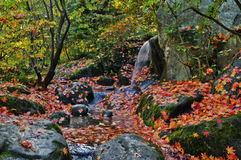 Waterfall and Autumn Leaves. Small waterfall and rocky stream with fallen orange and yellow maple leaves in Japanese Garden, Seattle, Washington Stock Image