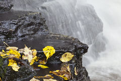 Waterfall with autumn leaves Royalty Free Stock Photos
