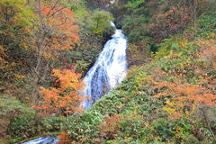 Waterfall in autumn Royalty Free Stock Image