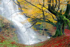 Waterfall in autumn with tree Stock Image