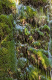 Waterfall background green grass Royalty Free Stock Photo