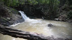 Waterfall in bamboo forest stock video footage