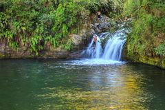 Waterfall in the Bay of Plenty, New Zealand, surrounded by native forest stock images