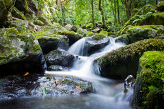 Waterfall. A beautiful waterfall in the forest Stock Images