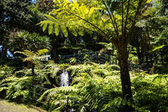Waterfall in a Beautiful Garden at Monte above Funchal Madeira. This wonderful garden is at the top of the cablecar from the seafront in Funchal. It is filled Royalty Free Stock Photo