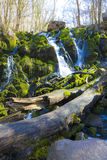 Waterfall in beautiful green nature with logs and rocks Stock Photos