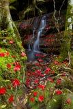 Waterfall Beautiful maple Stock Image