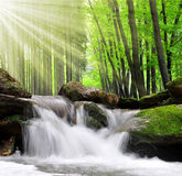 Waterfall. Beautiful waterfall in spring forest Royalty Free Stock Images
