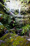 Waterfall. A beautiful tropical waterfall in the forest Royalty Free Stock Photography