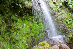 Waterfall. A beautiful tropical waterfall in the forest Stock Photos