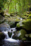 Waterfall. A beautiful tropical waterfall in the forest Royalty Free Stock Images