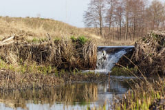 Waterfall through a beaver dam Royalty Free Stock Images