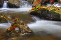 Waterfall in beech forest. On autumn Stock Photo
