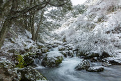 Waterfall and beech forest in snow Royalty Free Stock Images
