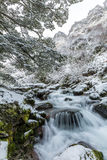 Waterfall and beech forest in snow Stock Photography