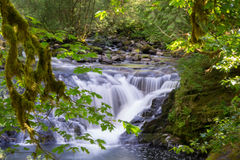 Waterfall behind tree leaves Royalty Free Stock Image