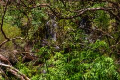 Waterfall belong a levada in the forest on Madeira. Portugal Royalty Free Stock Photography