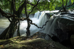 Waterfall. A waterfall and big tree Stock Image