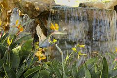 Waterfall birds of paradise Royalty Free Stock Photography