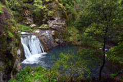 Waterfall in the Blue Lake at the Blue Mountains in New South Wa Stock Images
